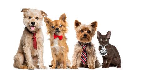개와 고양이는 흰색 배경 앞의 그룹 스톡 콘텐츠