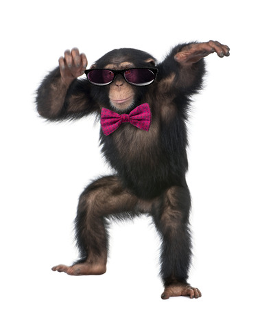 Young Chimpanzee wearing glasses and a bow tie, dancing in front of a white background