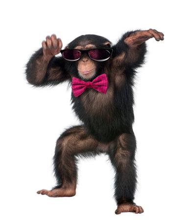 Jonge chimpansee dragen van een bril en een vlinderdas, dansen in de voorkant van een witte achtergrond