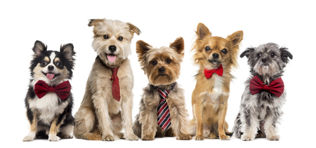 Group of dogs in front of a white background Stock Photo - 46063808