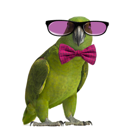 Yellow-naped Papagei trägt eine Brille und eine Fliege, isoliert auf weiß Standard-Bild - 46063811