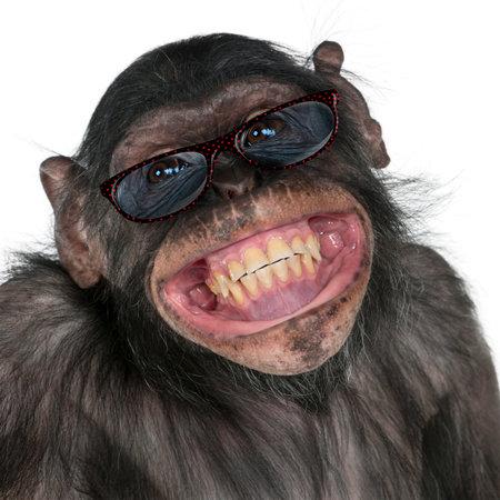 Close-up van gemengd ras monkey tussen de chimpansee en Bonobo glimlachen, 8 jaar oud Stockfoto