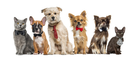 Group of dogs and cats in front of a white background Stockfoto