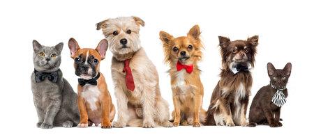 Grupo de perros y gatos en frente de un fondo blanco
