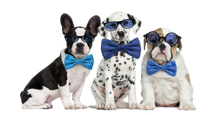 メガネと蝶ネクタイを身に着けている犬のグループ 写真素材