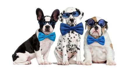 Gruppo di cani che indossa occhiali e papillon Archivio Fotografico - 46063852