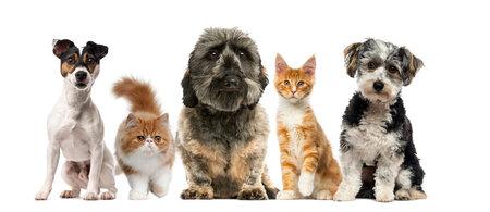 흰색 배경 앞의 강아지와 고양이의 그룹
