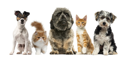 Group of dogs and cats in front of a white background Reklamní fotografie - 46063863