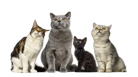 Group of cats in front of a white background Stockfoto