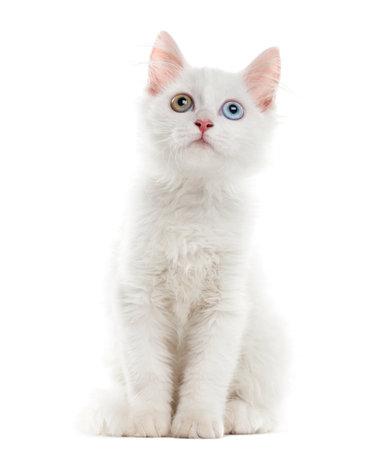 Witte kitten zitten in de voorkant van een witte achtergrond