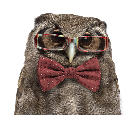 Close-up of a Verreauxs eagle-owl - Bubo lacteus (3 years old) wearing glasses and a bow tie in front of a white background Stock Photo