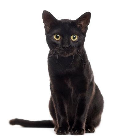 Zwarte kat kitten te kijken naar de camera, op wit wordt geïsoleerd Stockfoto - 52988556