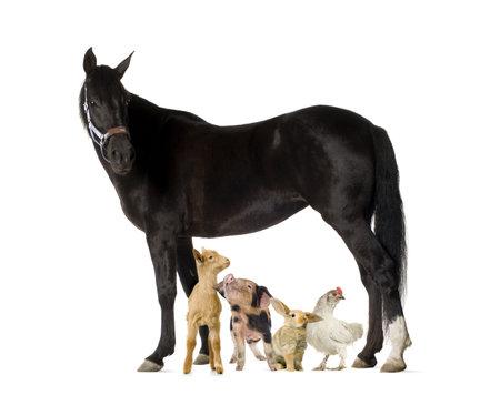 Groupe d'animaux de ferme isolé sur blanc