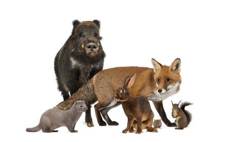 Group of wild animals isolated on white Standard-Bild