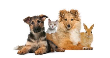 Groupe de jeunes animaux isolé sur blanc Banque d'images - 58597543