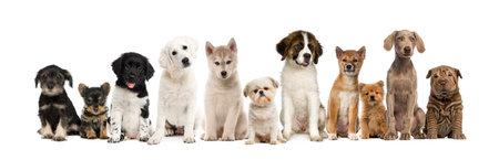 Gruppo di cuccioli in una riga, isolato su bianco Archivio Fotografico - 58621151