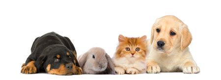 Grupo de animales domésticos jóvenes aislados en blanco