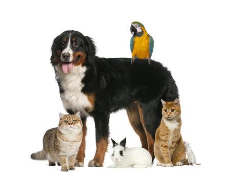 Groupe d'animaux de compagnie isolé sur blanc Banque d'images - 58597072