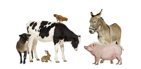 Group of farm animals isolated on white Archivio Fotografico