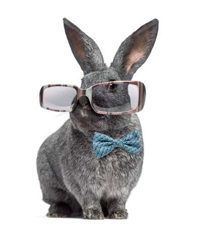 Funny Argente rabbit wearing glasses and bow tie isolated on white