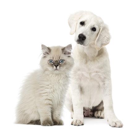 Katze und Hund isoliert auf weiß Sitzung