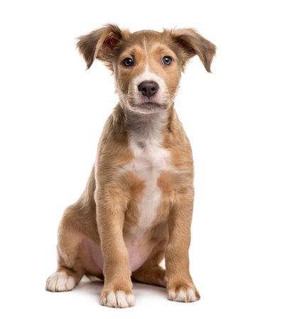Mixed breed dog sitting, isolated on white Stockfoto