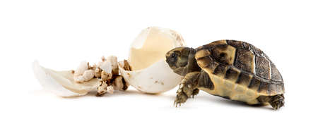 Hatchling, next to the egg from which he hatched out Stock Photo