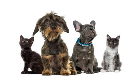 Group of kittens and puppies sitting, isolated on white 스톡 콘텐츠