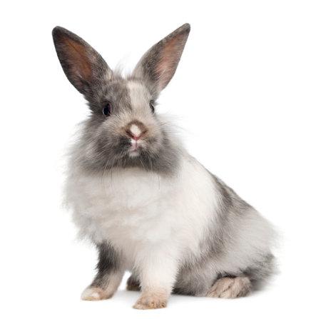 Kaninchen sitzen