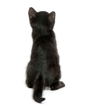 Rear view of a Black kitten sitting, 2 months old, isolated on white