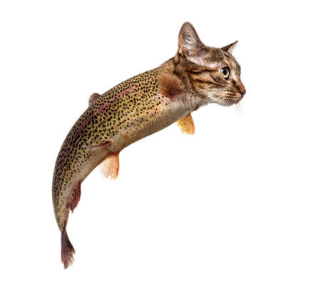 chimera with Rainbow trout and kitten's head swimming against white background Stock Photo