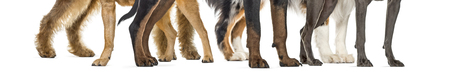 dog paws, in front of white background Standard-Bild - 111514453