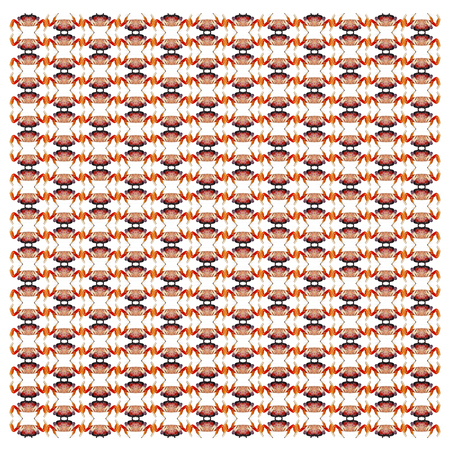 Red land crab, Gecarcinus quadratus, in repeated pattern, in front of white background Standard-Bild - 111477723