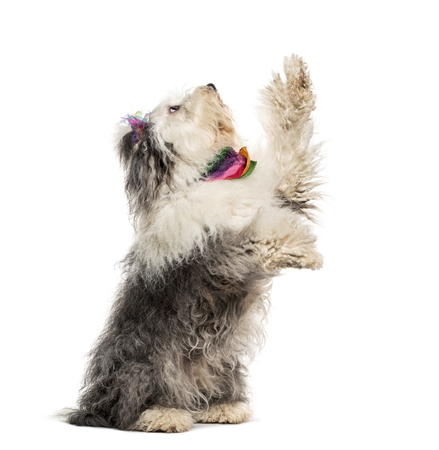 Mixed-breed dog sitting in front of white background Stockfoto