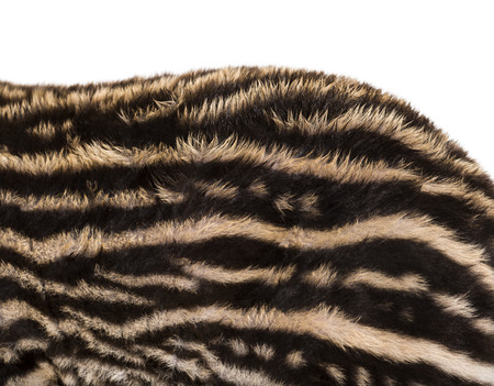 Close up of 2 Month old Brazilian tapir's fur in front of white background Stok Fotoğraf