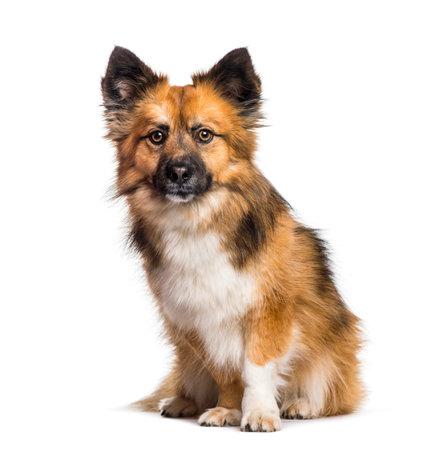 Mixed-breed dog sitting against white background
