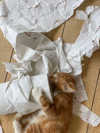 Top view of a Ginger Kitten, mixed-breed cat, playing with soft white paper