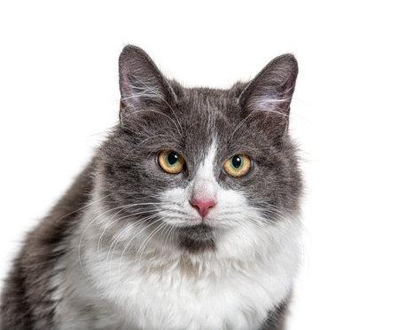 Close-up on a young Crossbreed cat blue eye 版權商用圖片