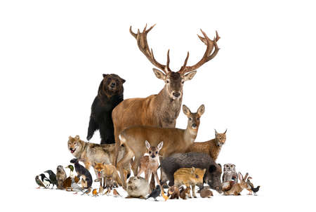 Large group of european animals, red deer, red fox, bird, rodent, wild boar, isolated 版權商用圖片 - 160764461