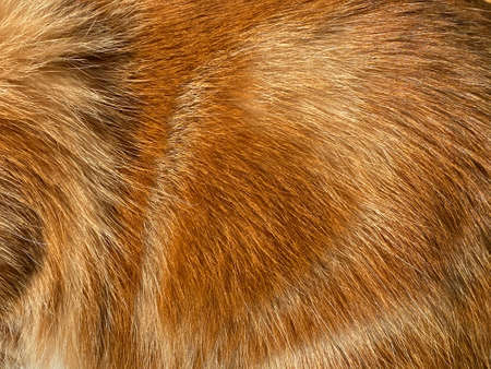 Close-up on a the hairy ginger cat, red fur, beautiful natural texture, closeup Imagens