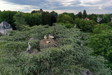 Aerial view of white stork and heron, nesting on a top of a tree