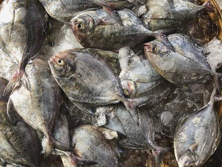 Top view on an assortment loose fish to sale at a fish market, Hue Market, Vietnam 版權商用圖片 - 160828816