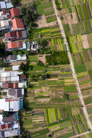 Aerial view on the garden Vegetable close to Hoi An, Vietnam