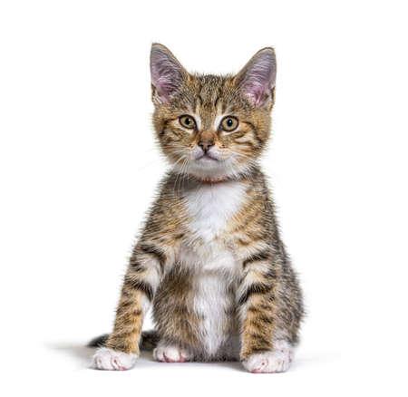 Kitten crossbreed cat isolated on white