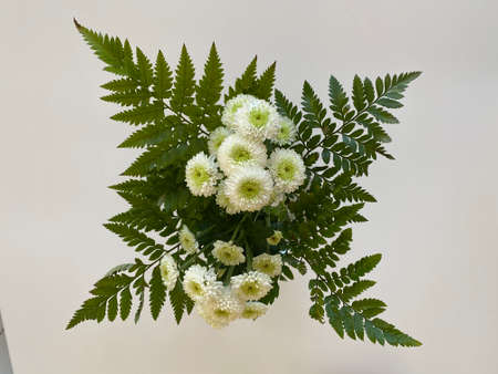 Bunch of White flowers on a white background