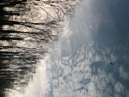 sky, clouds, birds and trees reflection on still water during a winter day