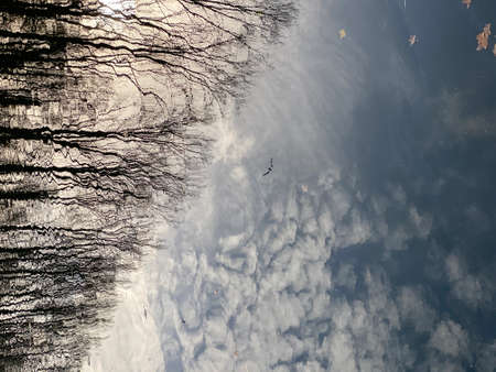 sky, clouds, birds and trees reflection on still water during a winter day 版權商用圖片
