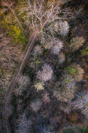 aerial view of a trail passing through a deciduous forest in early spring, some are blooming