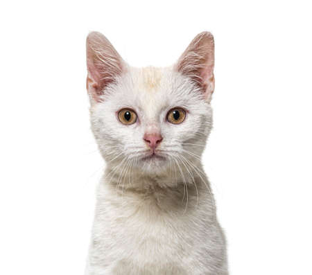 Head shot of a white young Crossbreed cat kitten isolated on white Stockfoto