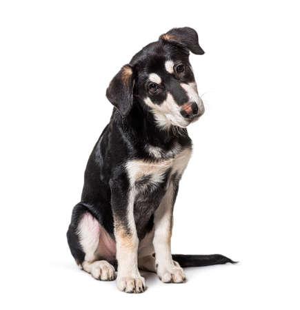 Crossbreed dog looking at the camera